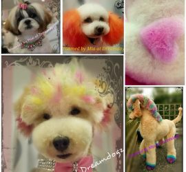 creative grooming DreamDogz